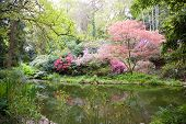 picture of garden eden  - Blooming trees in the nature during spring - JPG