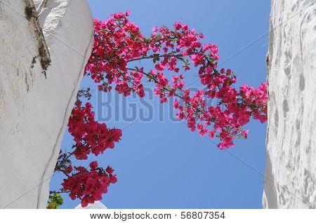 Pink Flowers Between White Walls