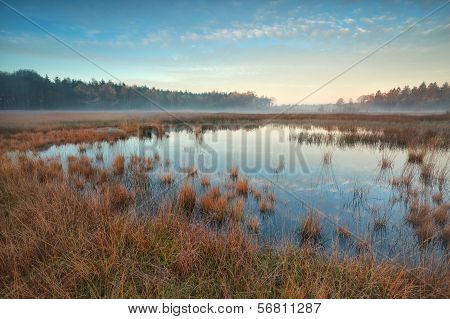 Autumn Sunrise Over Forest Swamp