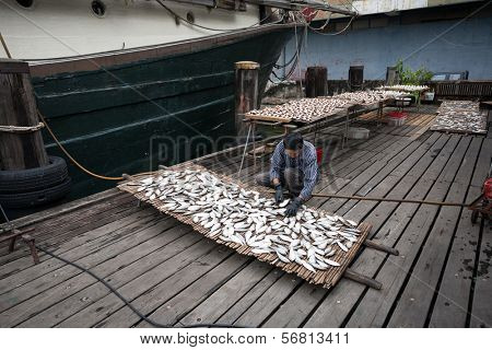MACAU - OCTOBER 30: Fisherman prepares fish for drying on the grid in the fishing port on October 30, 2012 in Macau, China. Fishing industry provides internal needs Macao products harvested in sea.