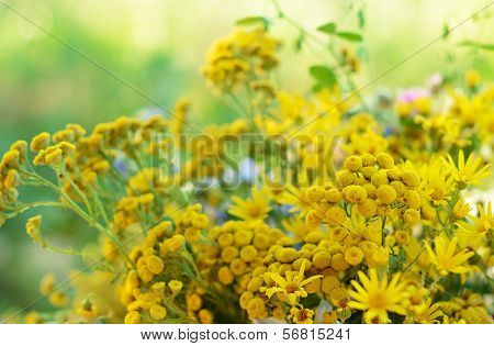 Bouquet With Tansy