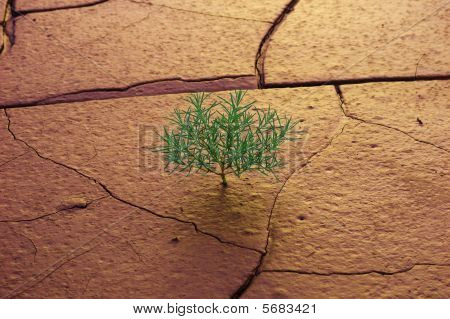 Grass Growing On Dry Soil