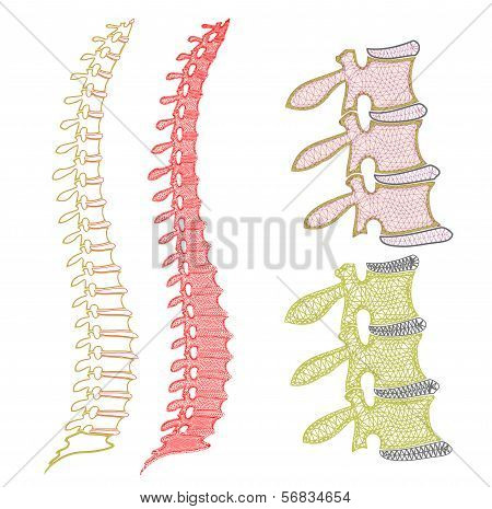 Spine Graphic