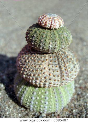 Sea Urchin Pyramid