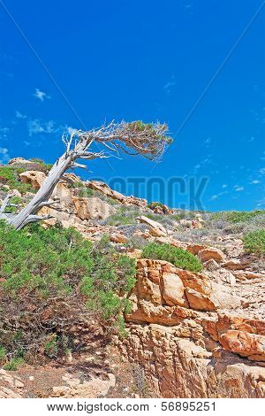Pine Branch And Rocks