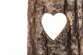 stock photo of hollow  - heart cut in hollow tree trunk - JPG