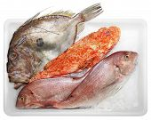picture of faber  - Fresh Scorpaenidae John Dory and Dentex quality and delicious fish solated on white background - JPG