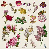 foto of carnations  - Vintage Victorian Flowers Clip Art - JPG