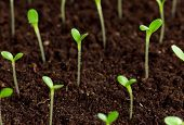 image of land development  - Green seedling growing out of soil - JPG