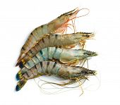 foto of tiger prawn  - raw tiger shrimps on white background - JPG