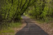 stock photo of bike path  - A hiking and biking trail in the woods.