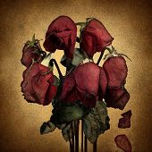 foto of lost love  - Lost love and broken heart emotions concept with wilted dying red roses and falling petals on old parchment grunge texture as a symbol of grief and sadness from relationship failure and romance rejection - JPG