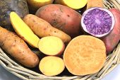 picture of solanum tuberosum  - Many different varieties of potatoes some halved  - JPG