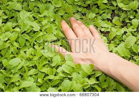 human hand and green plant