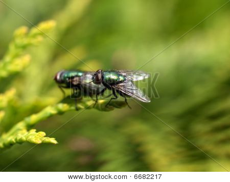 Matting flies