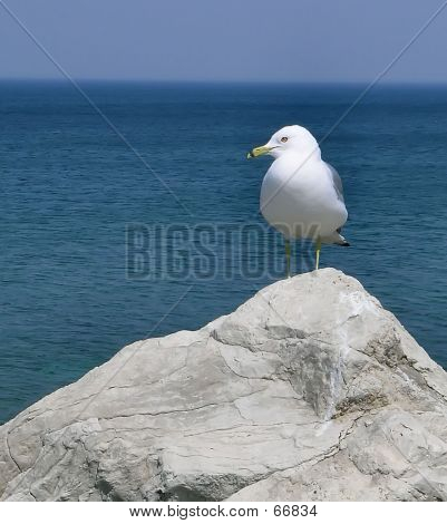 Rock With Seagull Perched On Top
