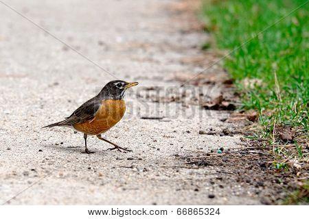 A Small Bird On A Floor