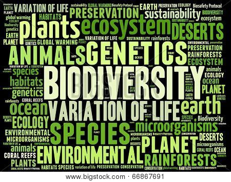 Biodiversity in word collage