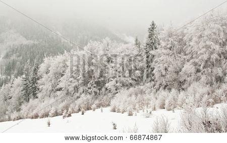Frozen Snowy Trees in Winter Landscape