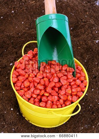 Corn Sowing Seed