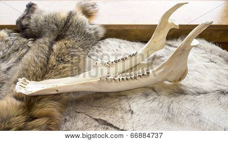 Moose Jaw Skeleton