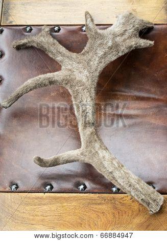 Caribou Antler