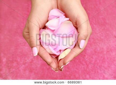 rose petals in woman hands