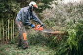 picture of chainsaw  - Professional gardener cutting tree with chainsaw in the garden - JPG