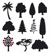 pic of linden-tree  - collection of trees silhouettes vector illustration on white background - JPG