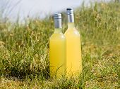 image of elderflower  - Bottles with fresh clear yellow elderflower lemonade - JPG