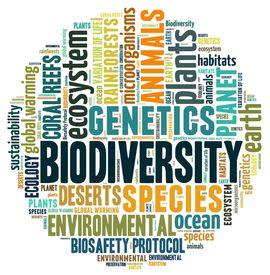 picture of biodiversity  - Biodiversity in word collage - JPG