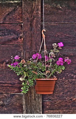 Flower Pot On The Wooden Wall