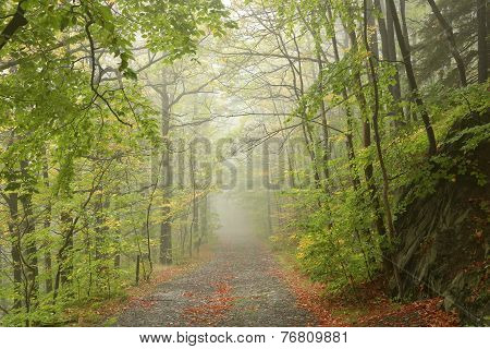 Path through early autumn forest