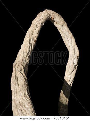 Gnarled wood branch