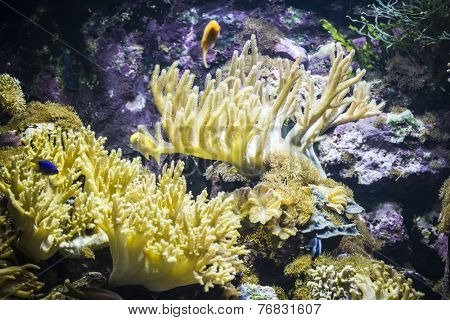 tropical, seabed with fish and coral reef
