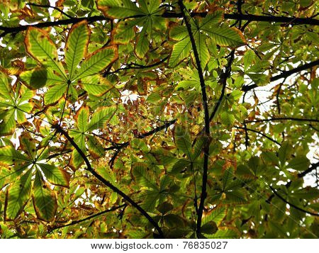 Yellowing autumn leaves on the sky background.