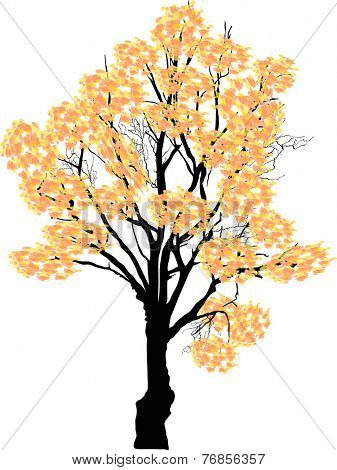 illustration with light yellow fall tree isolated on white background