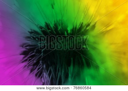 Abstract dandelion flower color background, extreme closeup.