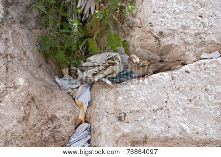 Notes At The Crack Of The Wailing Wall And A Sparrow. The Wailing Wall Is Located In The Jerusalem