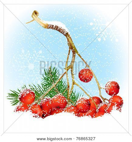 Christmas snow background with rowan. Vector illustration