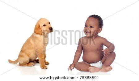 African baby and labrador puppy isolated on a white background