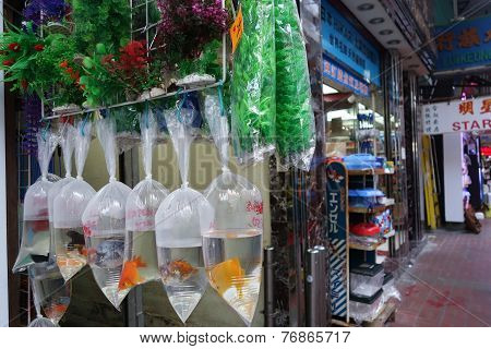 Hong Kong Gold Fish Market In Tung Choi Street