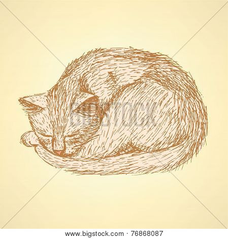 Sketch Sleeping Cat T In Vintage Style