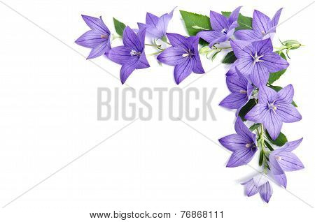 Photo Corner Made Of Bellflowers Isolated Over White Background