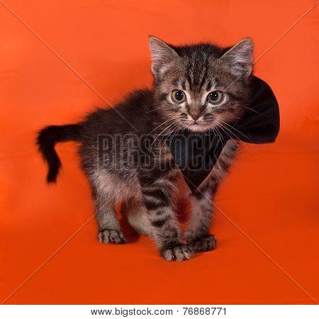 Little Tabby Kitten In Bow Tie Standing On Orange