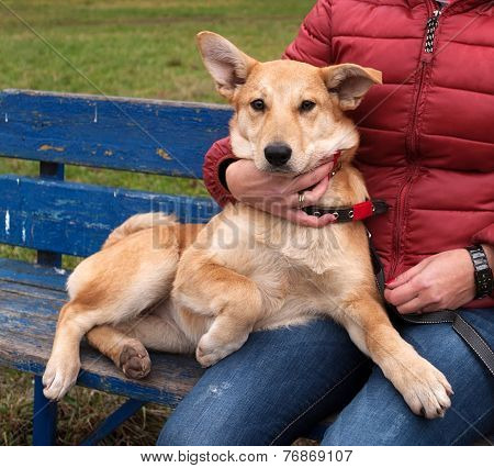 Yellow Puppy On Leash Sits On Bench