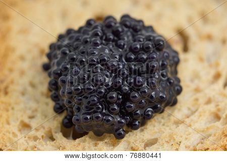Macro of caviar over piece of toast