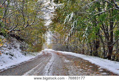 Road and trees covered with snow