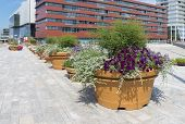 stock photo of planters  - row of large planters with blooming flowers in a dutch city  - JPG
