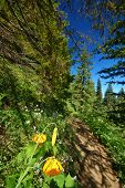 hiking trail in the mountains poster